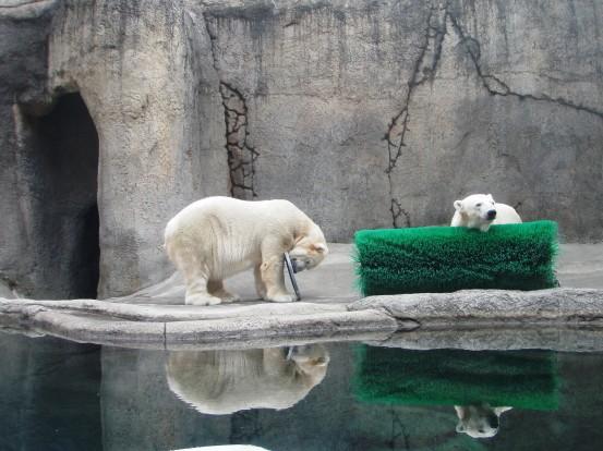 Polar Bears - Portland, Oregon