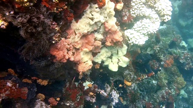 Corals of the Galapagos Islands