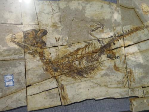 Small Mammal Fossil
