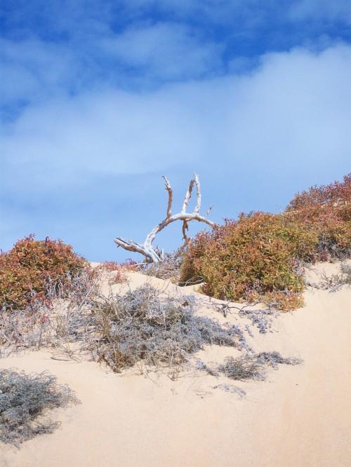 The dunes between beaches