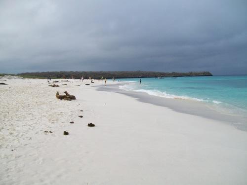 Beautiful white sand beach of Gardner's Bay
