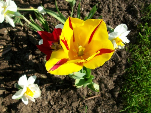 Yellow Flower 4