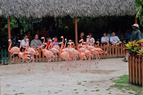 Pink Flamingos in the Bahamas