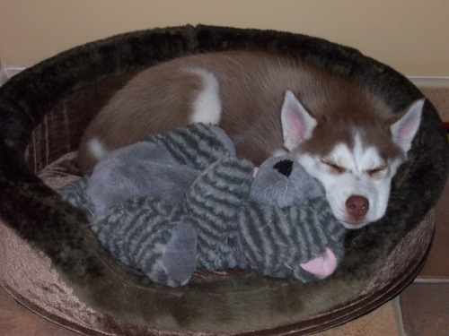Cheyanne and her favorite stuffed animal